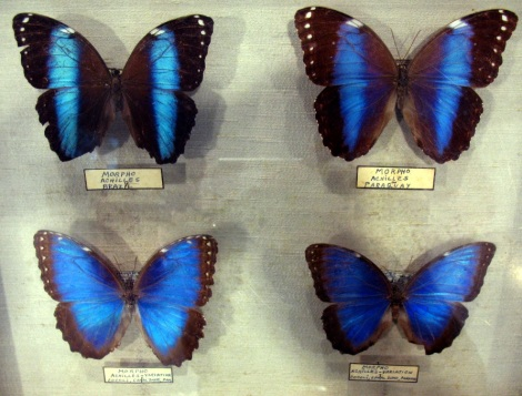 Butterflies in a Museum